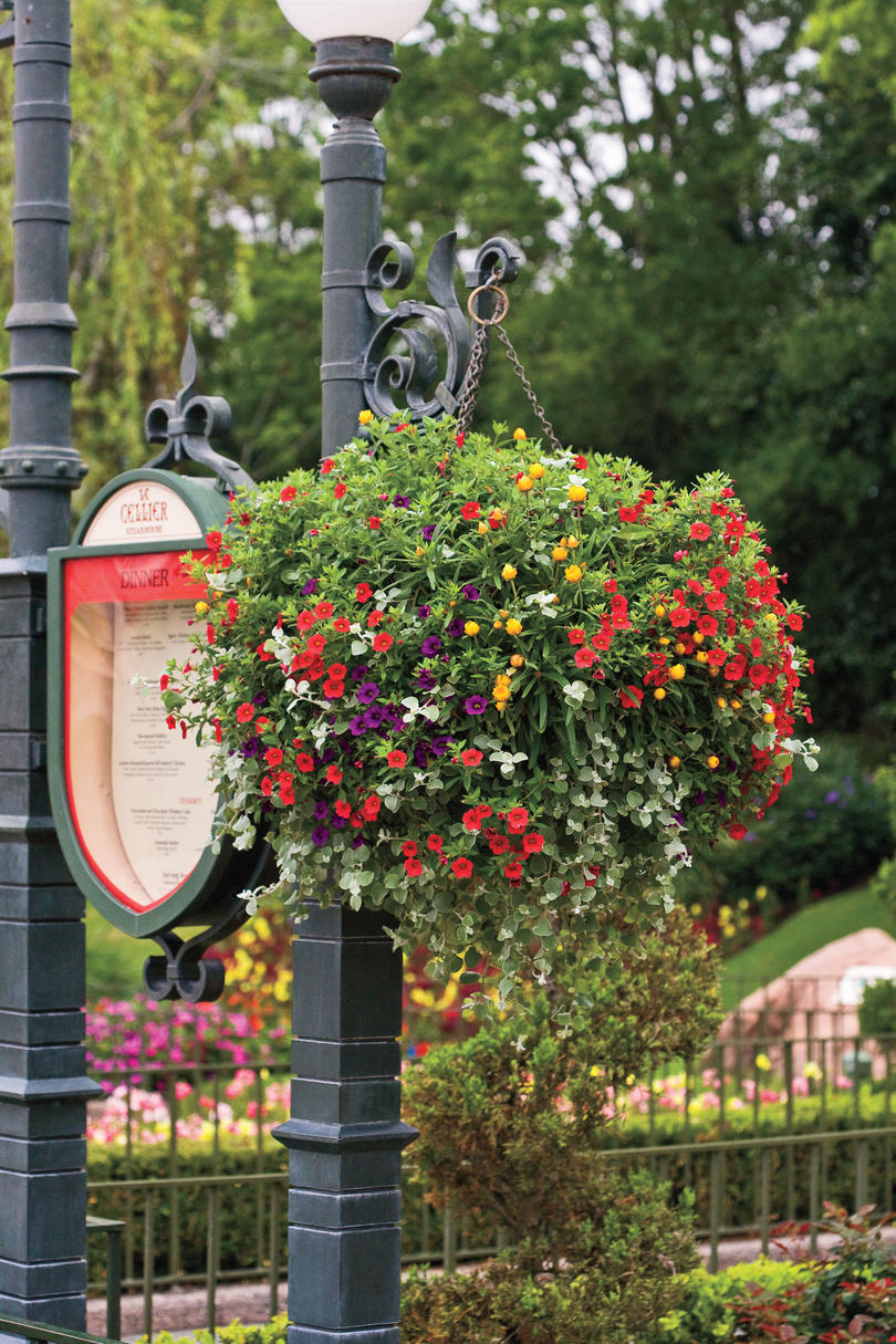 Hanging Garden Baskets Southern Living