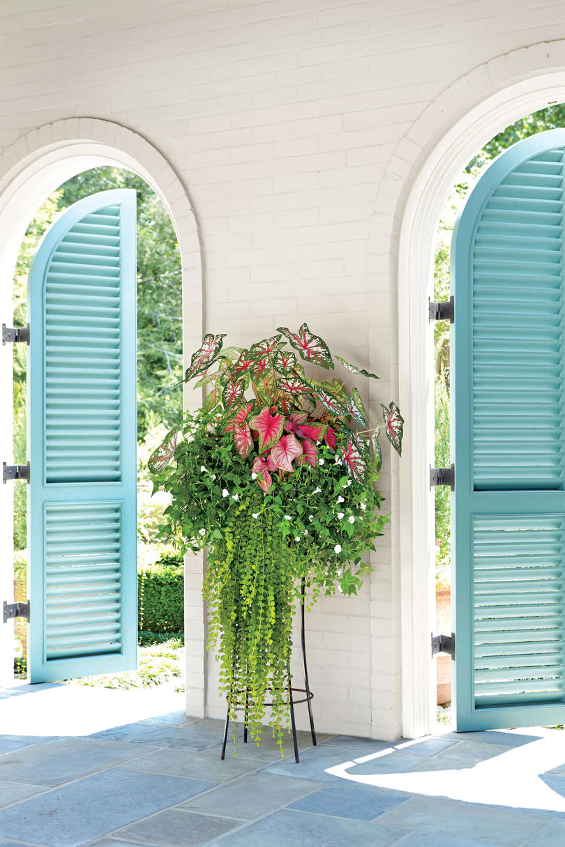 Spectacular container gardening ideas southern living Tall narrow indoor plants