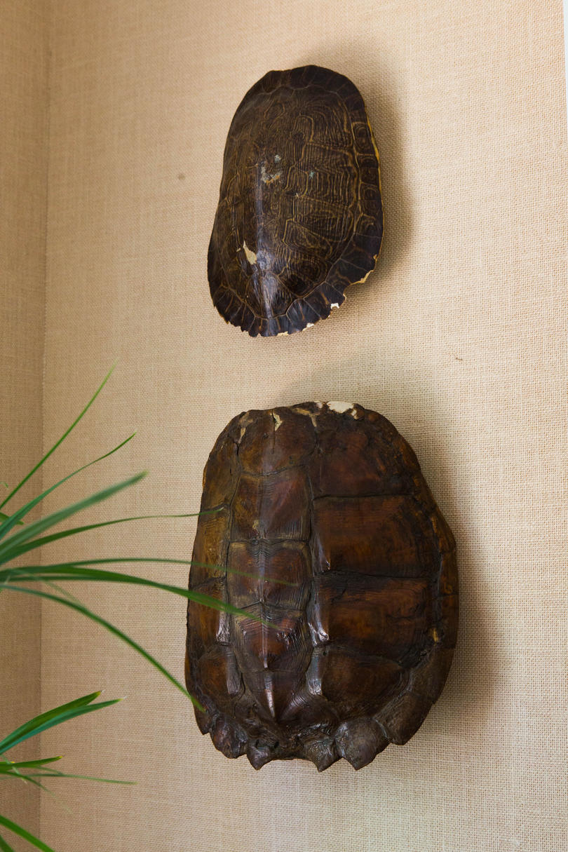 Turtle Shell Wall Art