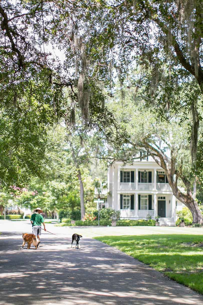 Walking Dogs White House Spanish Moss
