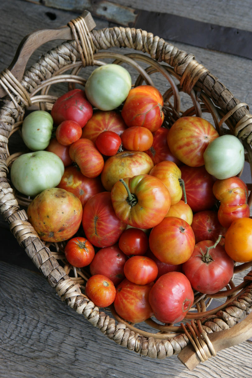 Basket of Heirloom Tomatoes