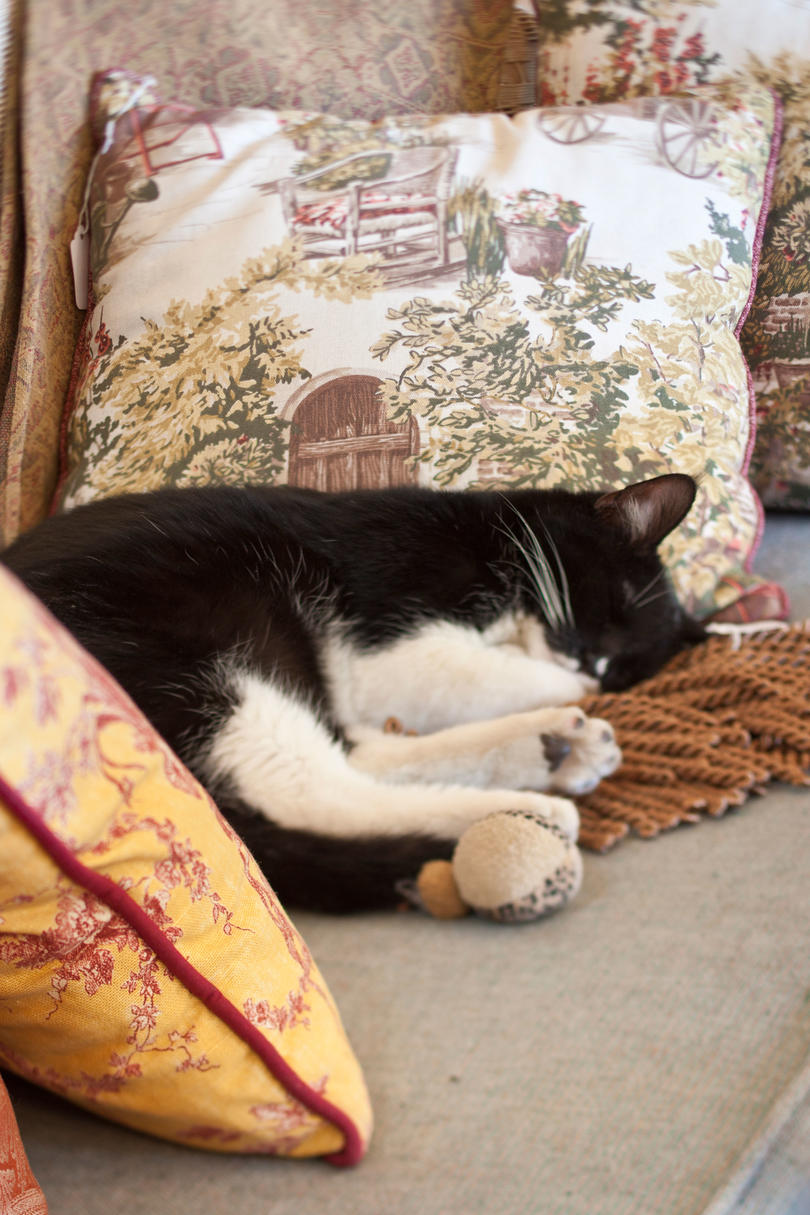 Black and White Cat Sleeping on Couch
