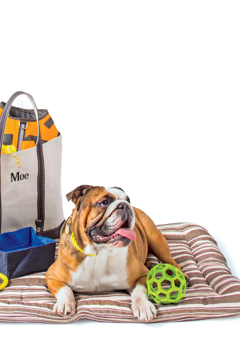 bulldog with toys on dog bed
