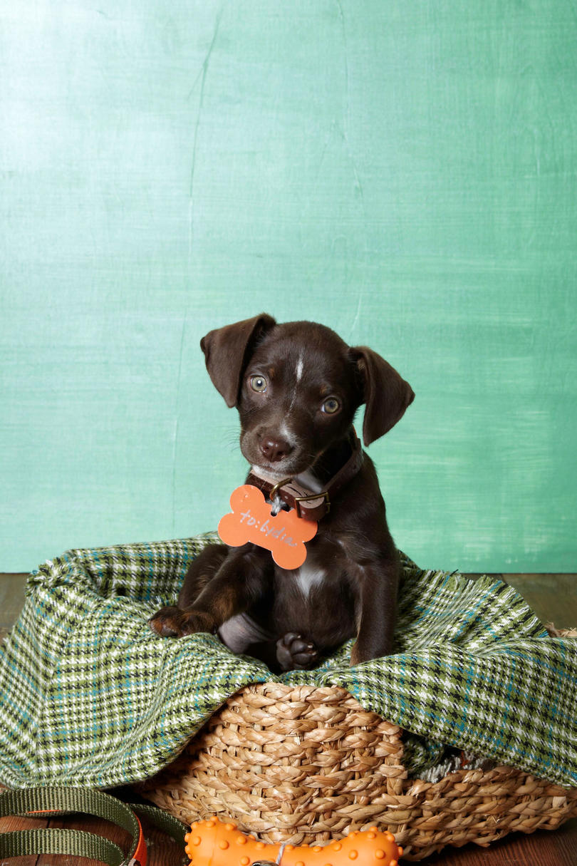 Our Favorite Names for Southern Dogs