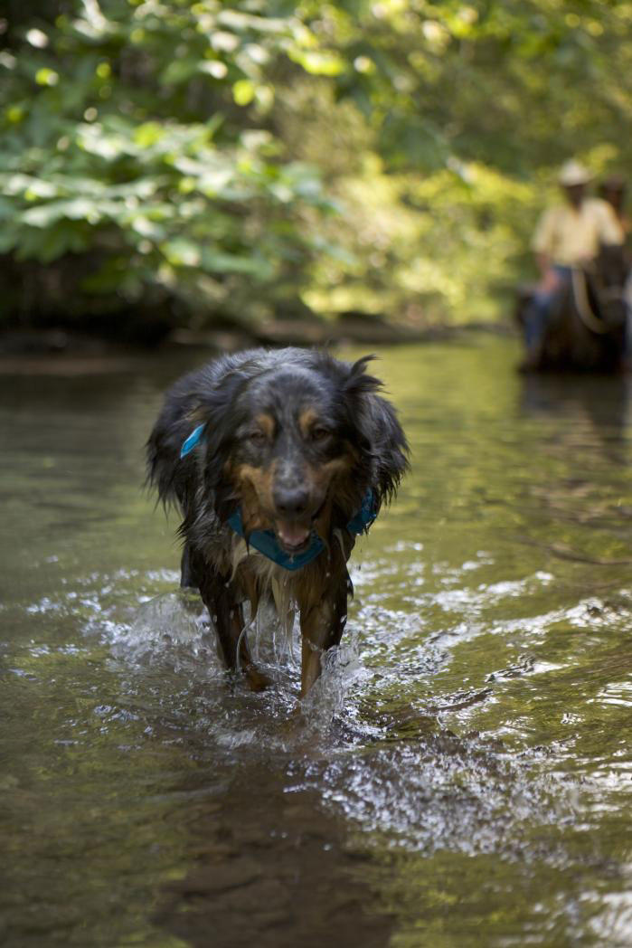 Dog playing in stream