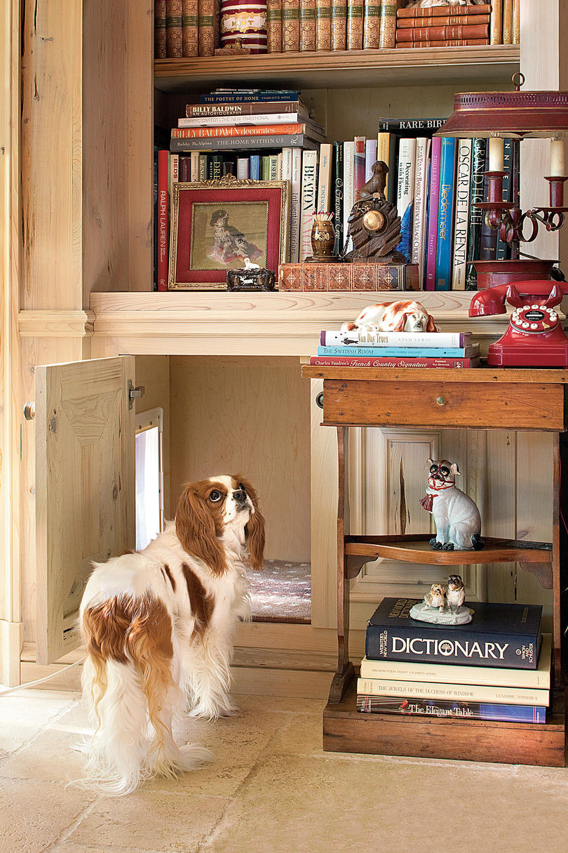King Charles Spaniel near doggie door