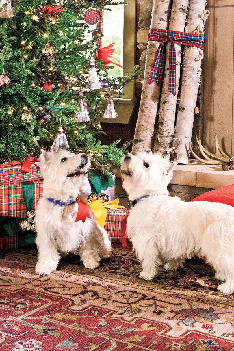 two westies in front of christmas tree