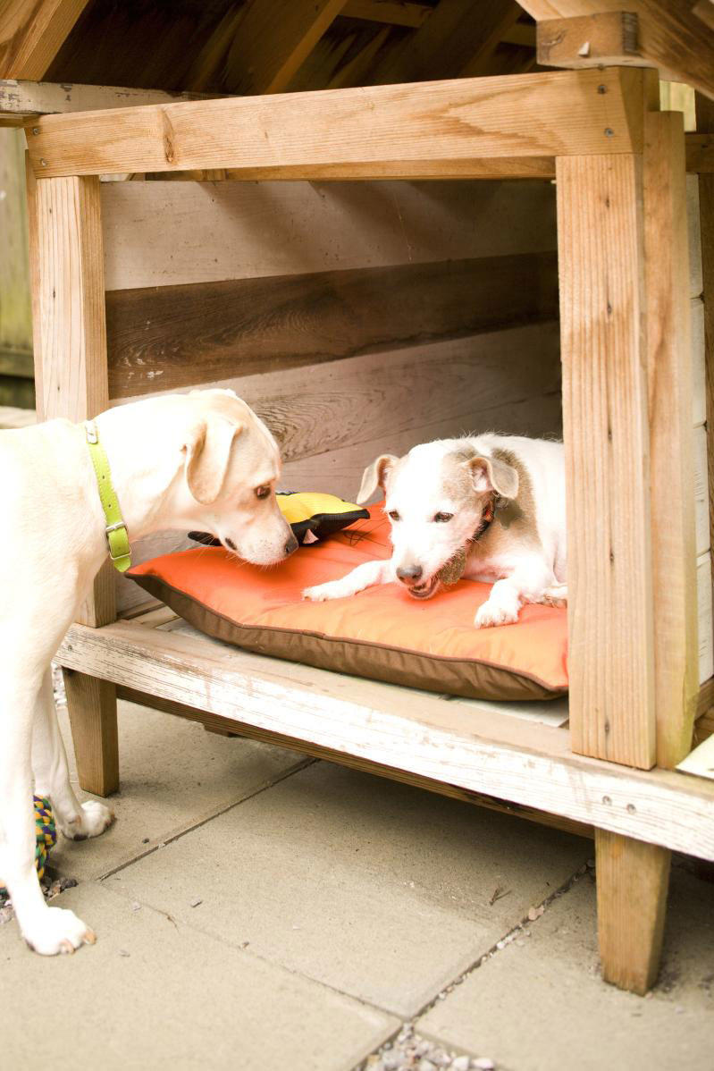 two dogs in dog house