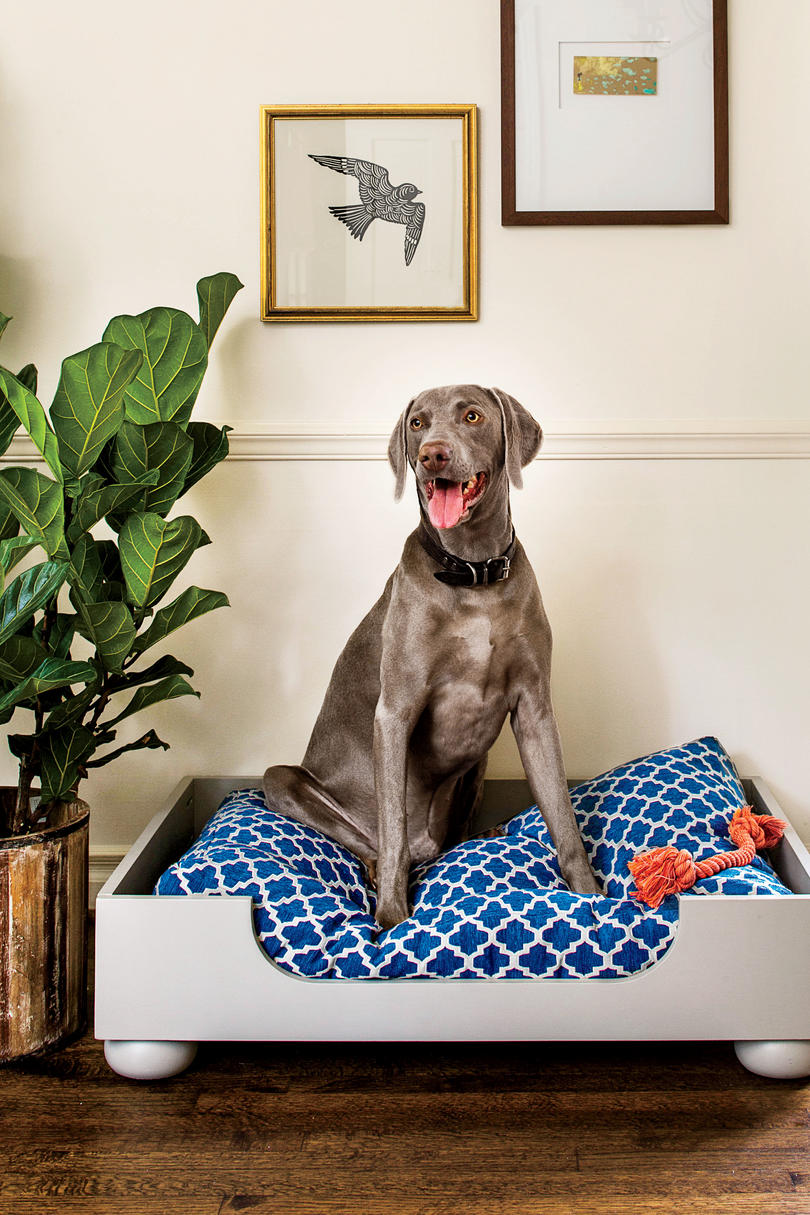 weimaraner on dog bed