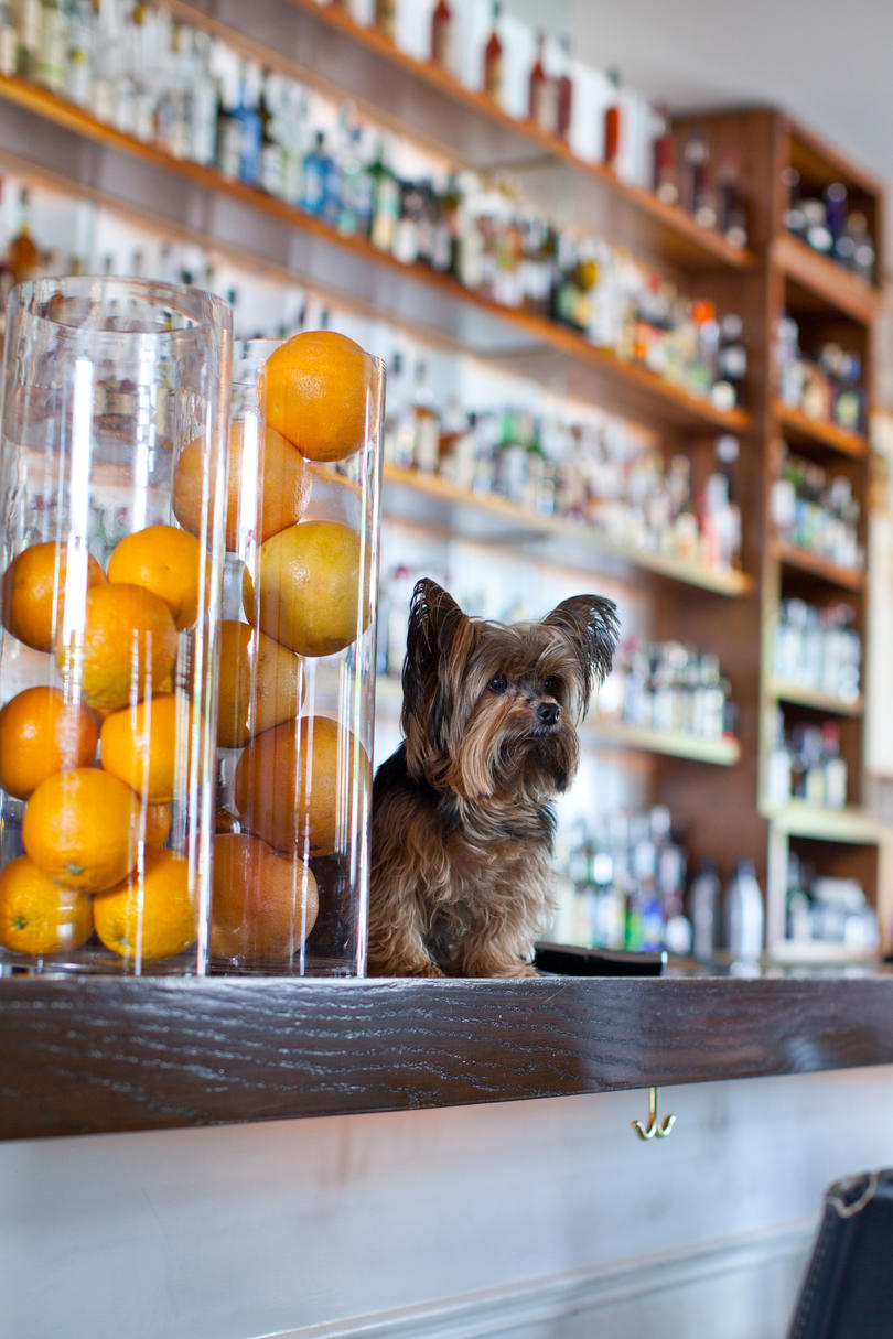 Interior of Cure bar showing yorkshire terrier standing on bar counter.