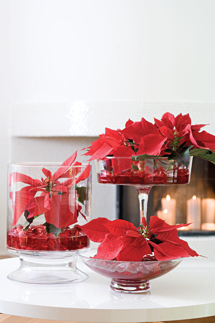 Centerpiece Poinsettias