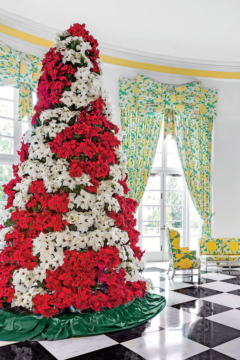 Displaying Poinsettias
