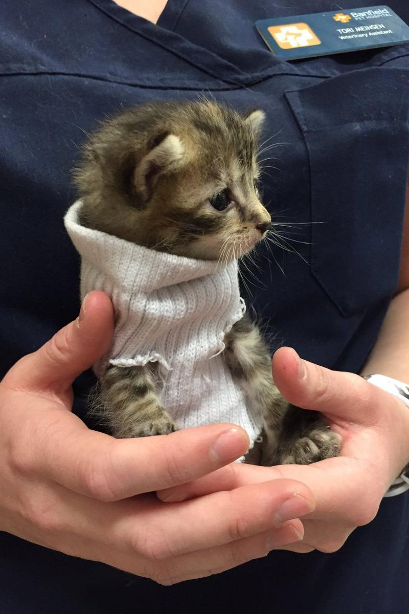 This rescued kitten wrapped up in a cozy sweater