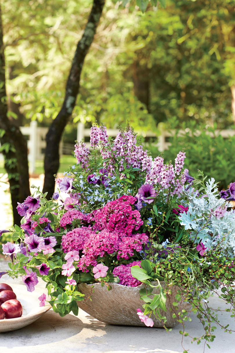 Pink and Purple Flowers in Container