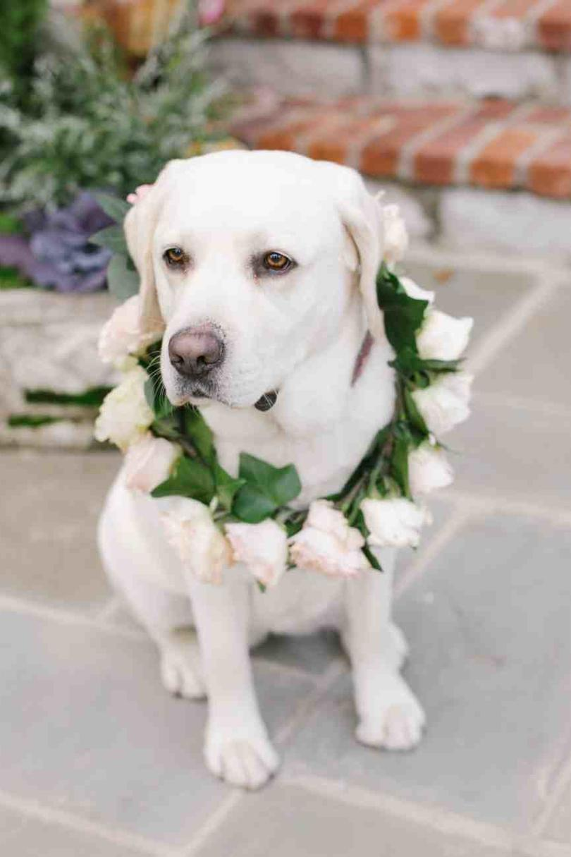 Dogs in Weddings flower girl