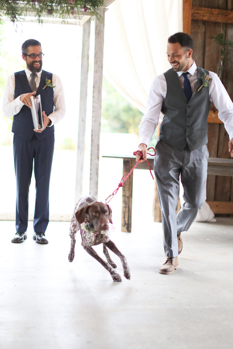 Dogs in Wedding groomsman