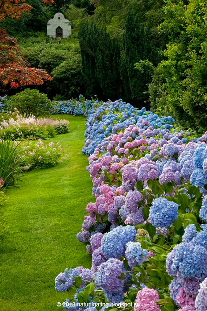 17 dreamy hydrangea gardens that are giving us major inspiration southern living. Black Bedroom Furniture Sets. Home Design Ideas