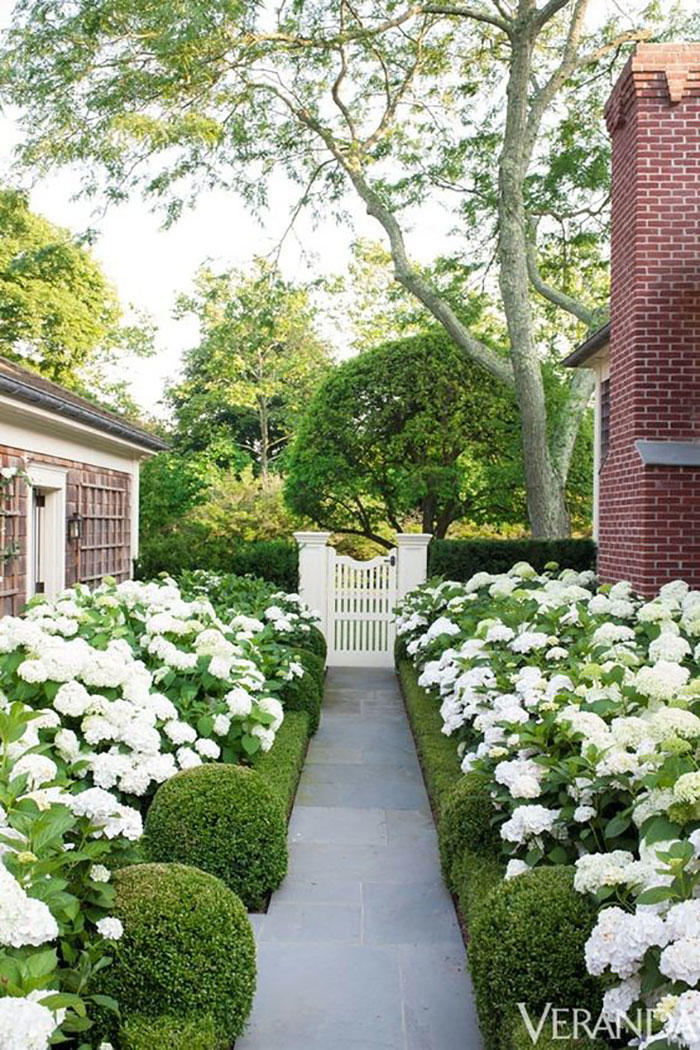 White Hydrangeas Around Stone Path