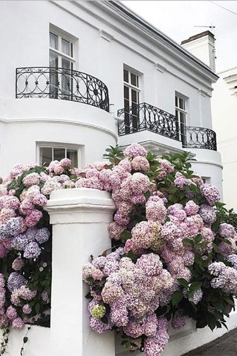 gardens-screen-shot-2017-01-31-at-1.40.32-pm Ze Design With Hydrangeas Garden on garden design with shrubs, garden design with lilacs, garden with hosta and hydrangea, garden design with phlox, garden design with morning glories, garden design with bougainvillea, garden design with daisies, garden design with japanese maples, garden design with succulents, garden design with evergreens, garden design with delphinium, garden design with rhododendrons, garden design with hostas, garden design with azaleas, garden design ideas for small backyards, garden design with anemones, garden design with vines, garden design with geraniums, garden design with gladiolus, garden design with bulbs,