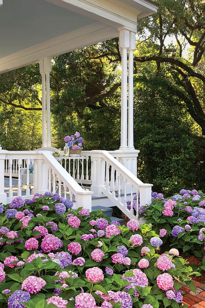 Pretty Hydrangeas Below White Porch