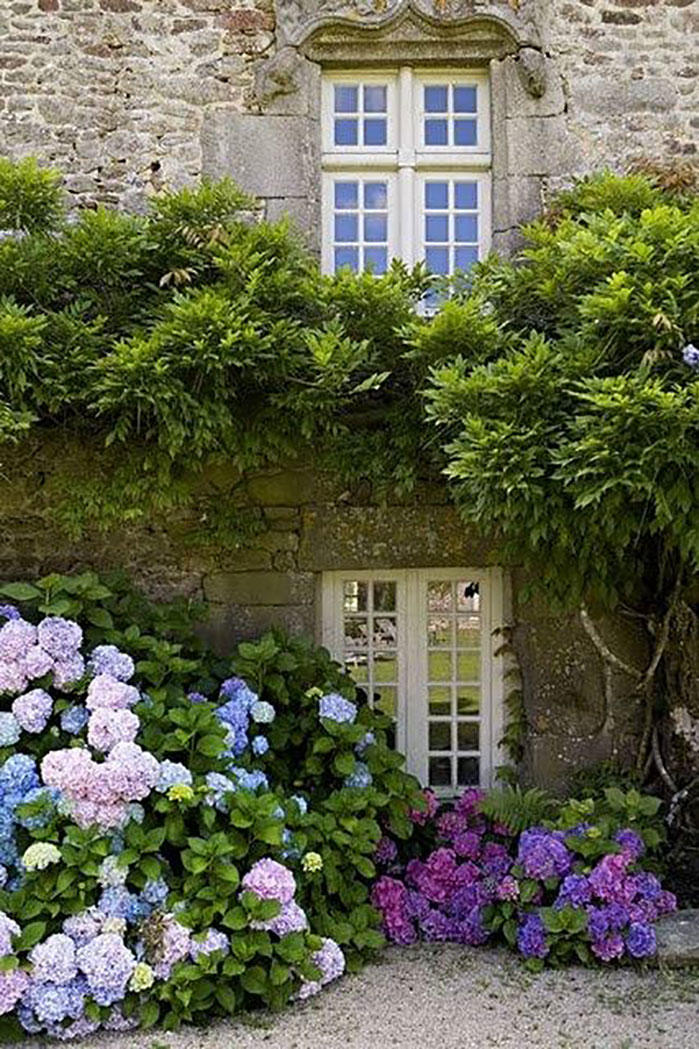 Hydrangeas in Front of Stone House