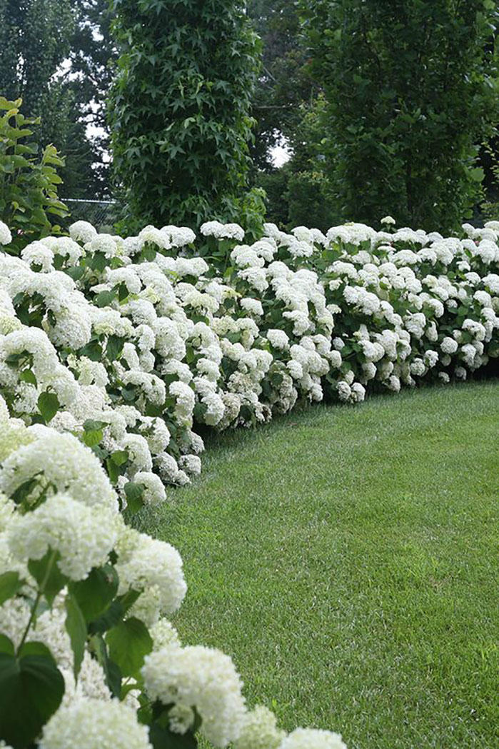 17 Dreamy Hydrangea Gardens That Are Giving Us Major Inspiration ...