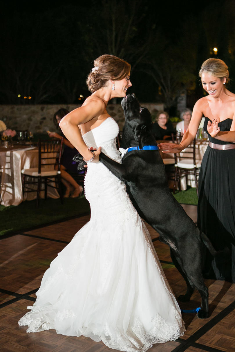 Dogs in Wedding dance