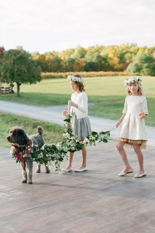 Dogs in Wedding leash