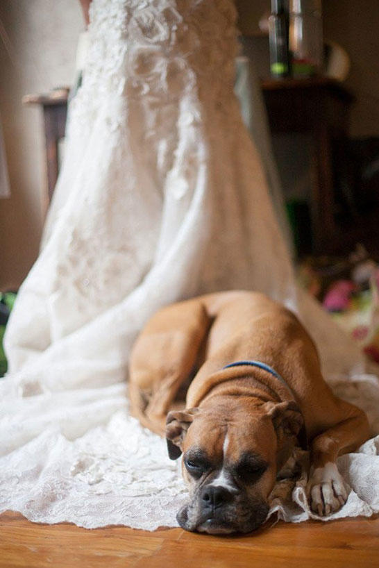 Dogs in Wedding train