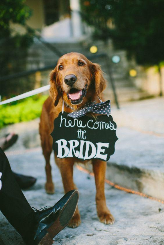 Dogs in Wedding grand entrance