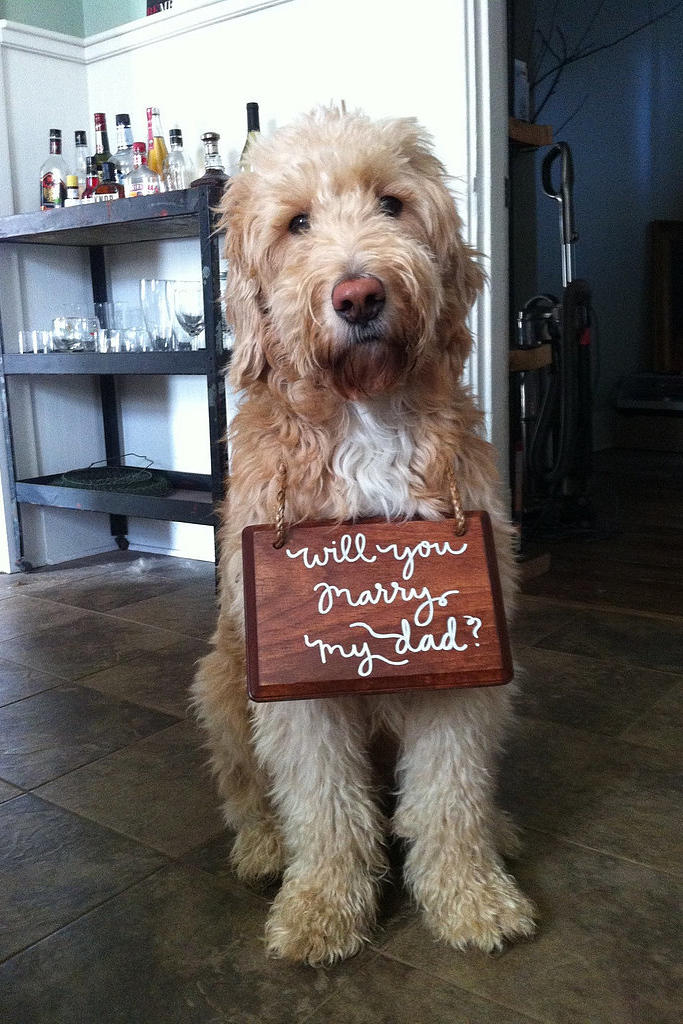 Dogs in Wedding propose