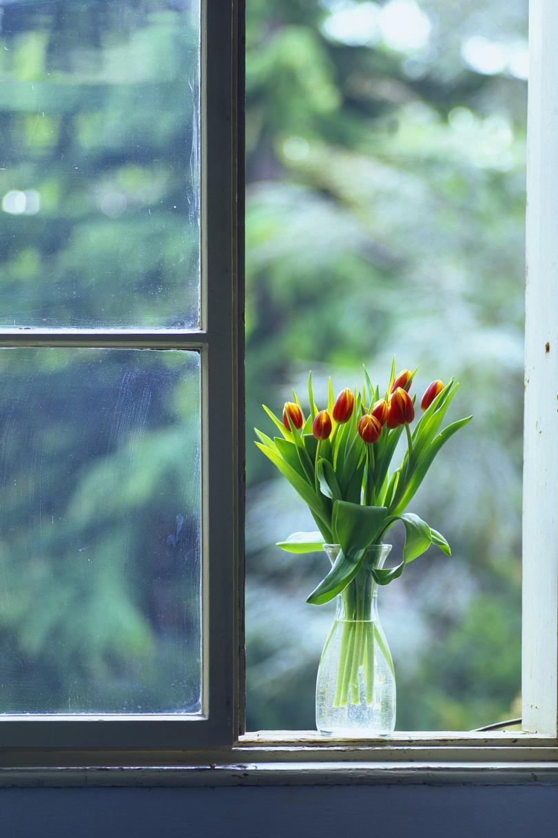 Follow these guidelines to make tulips last in arrangements.