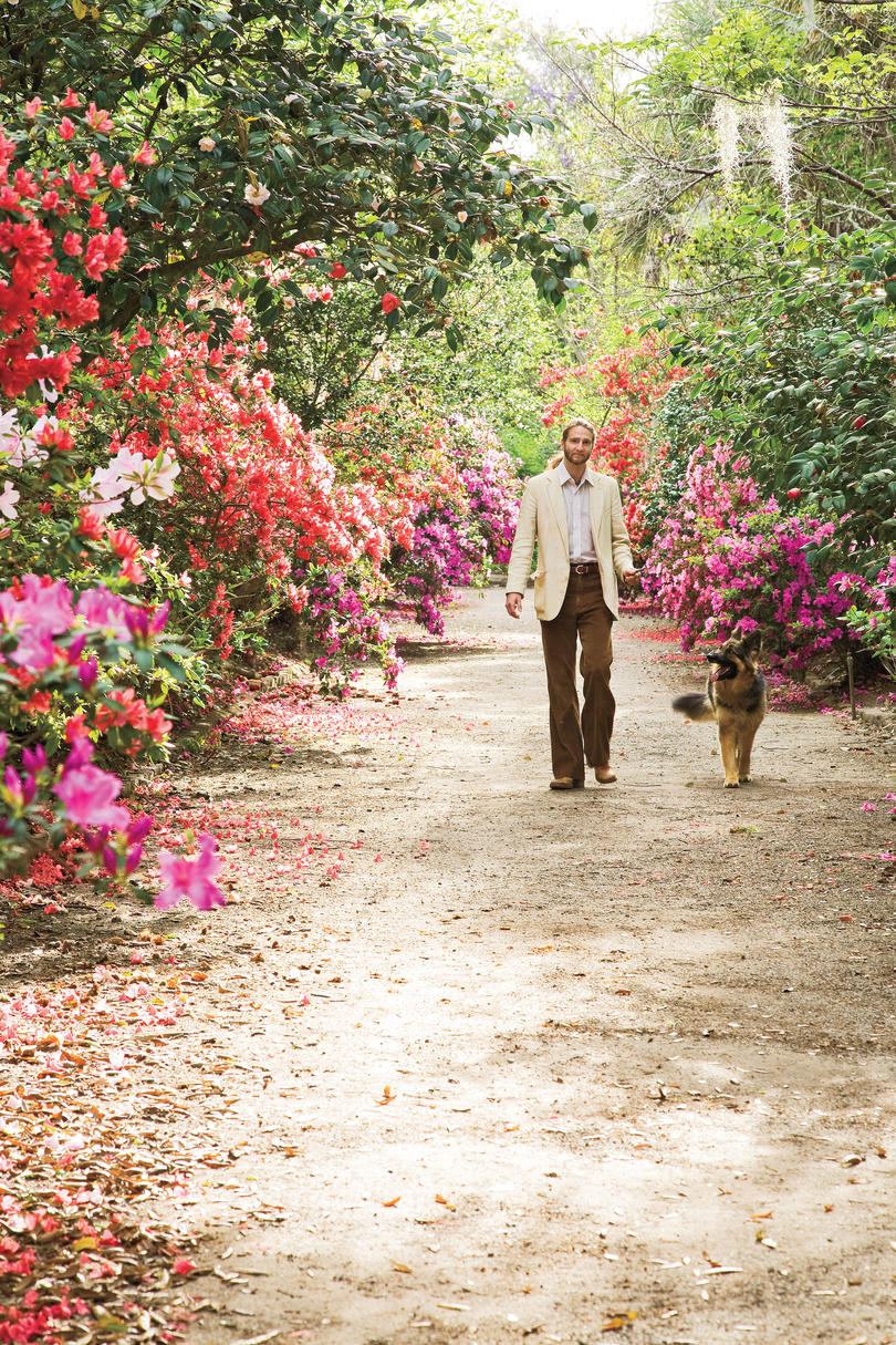 Man Walking Dog In Garden Of Azaleas