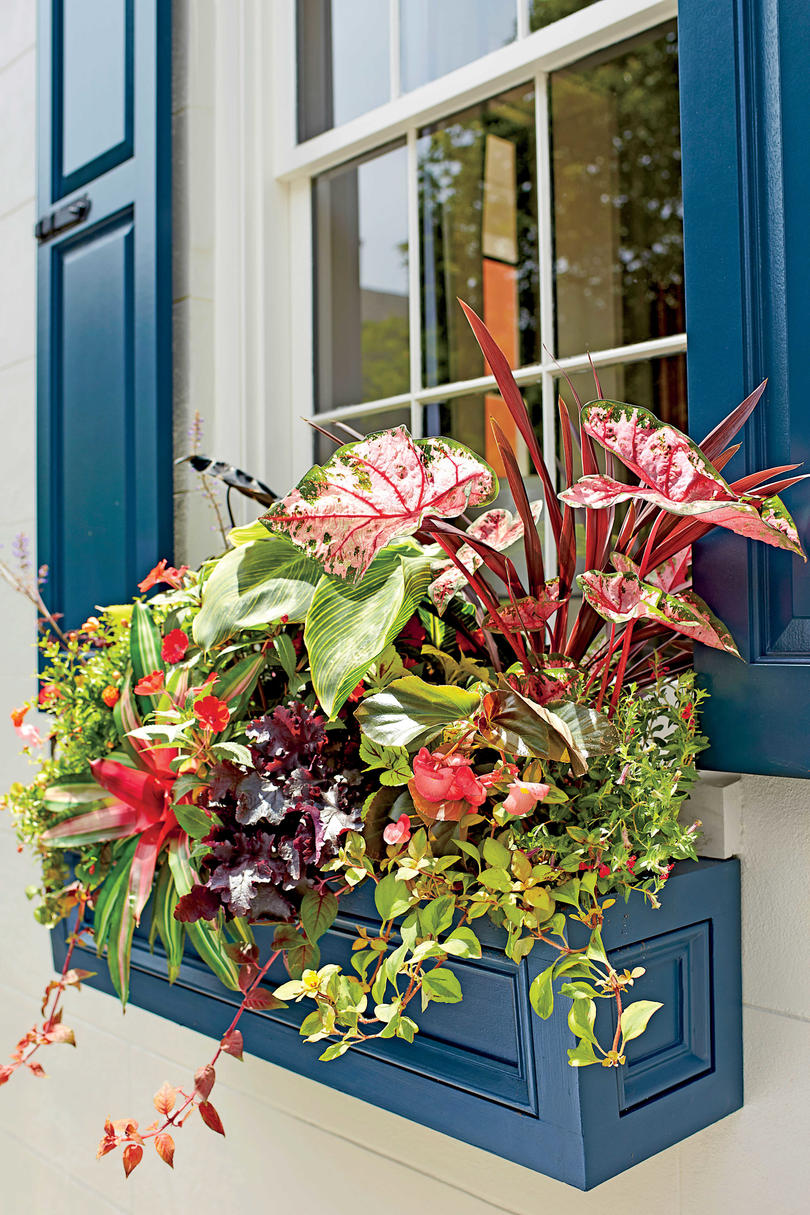 Wow with Window Boxes