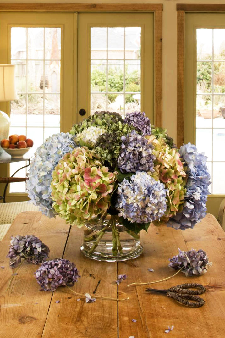 10. How can I get cut hydrangea blooms to keep their color?