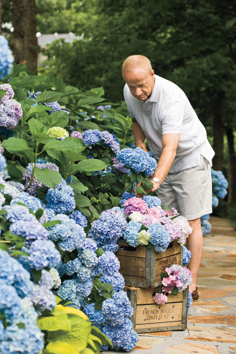 6. What's the deal with reblooming hydrangeas?