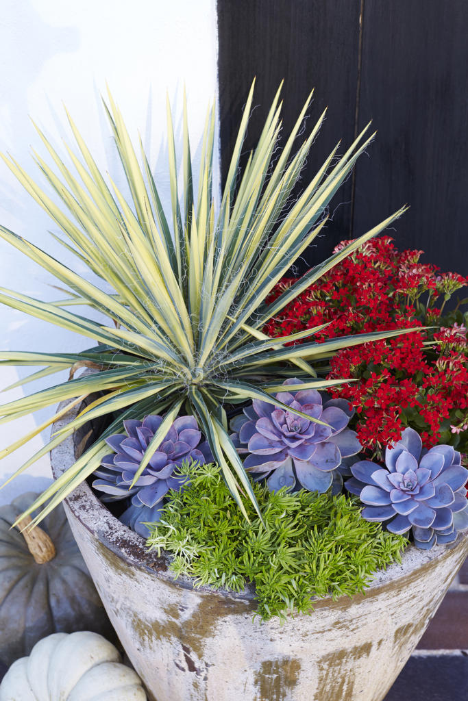 Heat Tolerant Container Gardens For Sweltering Summers