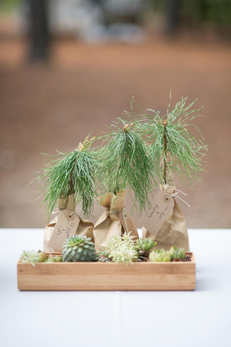 Personalized Pine Wedding Favor