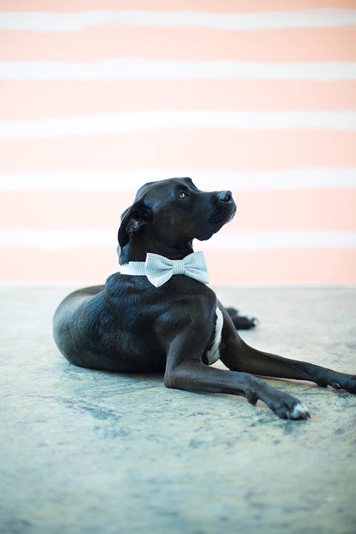 DIY Doggy Bow Tie