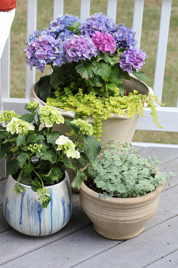 29 Ways To Grow Hydrangeas In Containers Southern Living