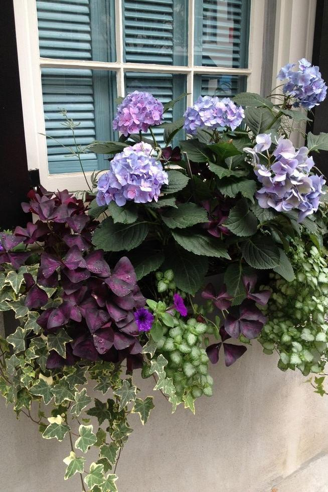 29 Ways to Grow Hydrangeas in Containers - Southern Living