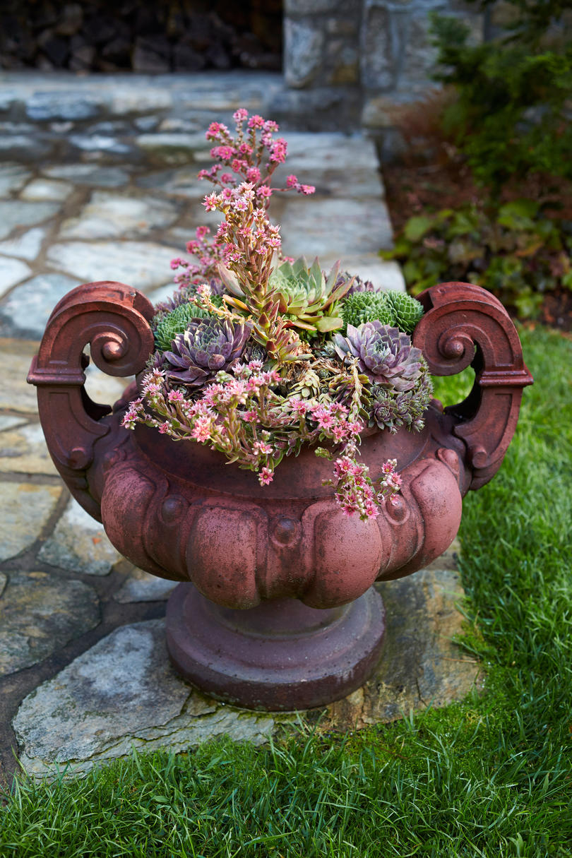 Succulent Container in Reeves Highlands, NC Garden