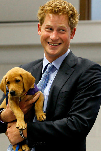 Prince Harry and a Puppy