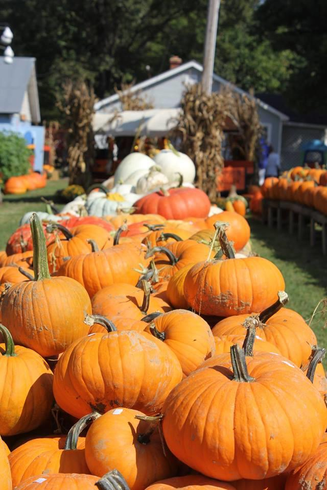 Best Pumpkin Patches in Every Southern State Arkansas