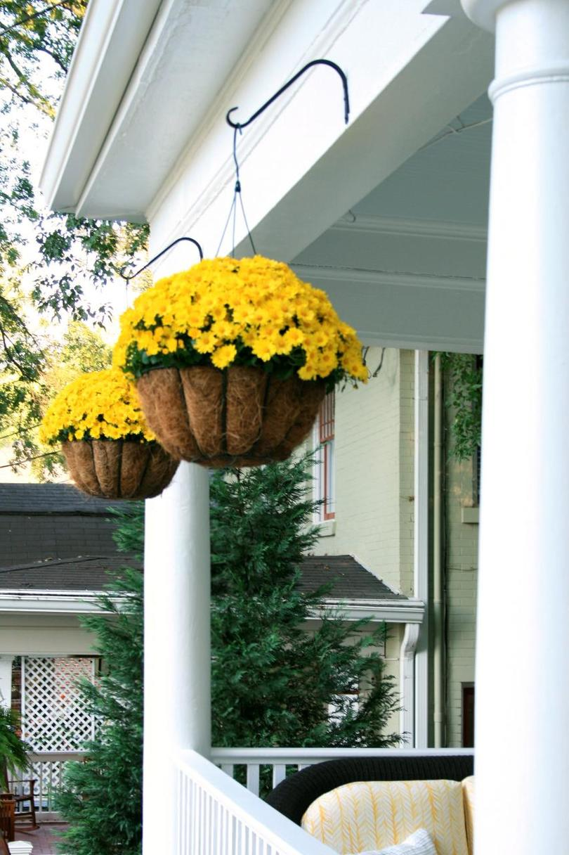Incredible Ways to Decorate with Mums