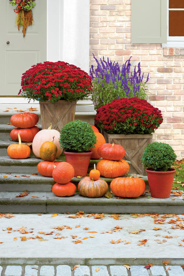 Line Your Porch with Mums