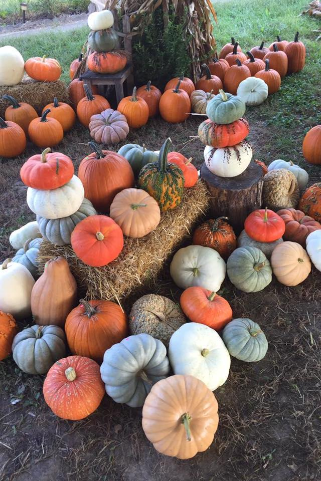 Best Pumpkin Patches in Every Southern State Missouri