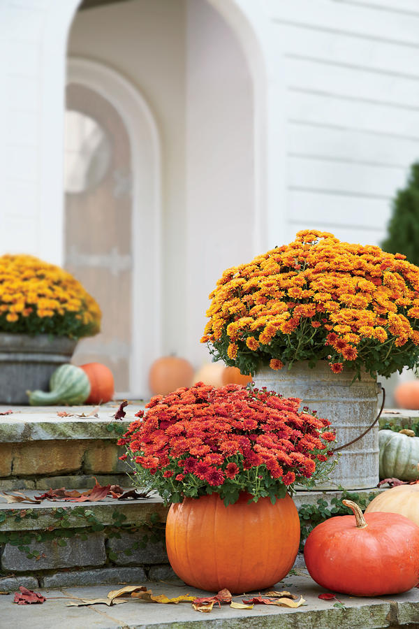 incredible ways to decorate with mums rh southernliving com