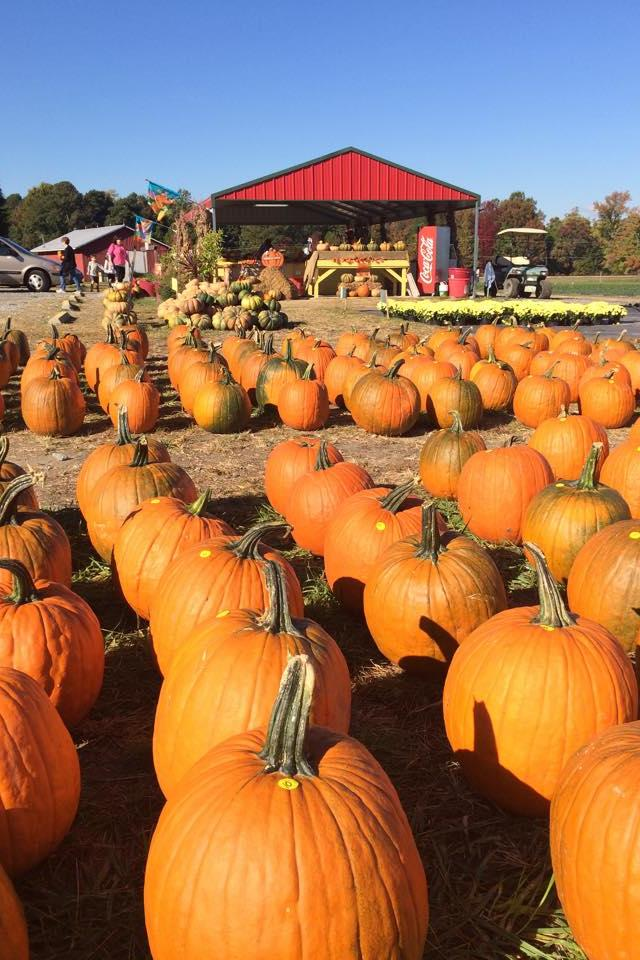 Best Pumpkin Patches in Every Southern State North Carolina