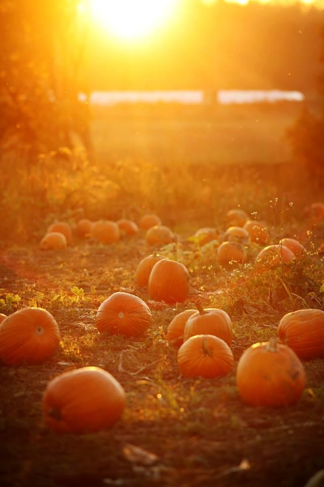 Best Pumpkin Patches in Every Southern State Texas
